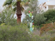Another sculpture on the same property as the last. A fake cactus.