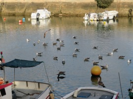 Some fishermen were cleaning out their boats and the seabirds weren't venturing far away.