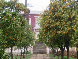 The grounds were covered with oranges, a sign the temperatures have dropped a little.