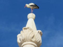 The storks have returned and are busy building nests, courting and making all kinds of wonderful noises.