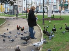 Only in the middle of this city would you find ducks, chickens, rooster, pigeons etc. right in the middle of a park. They were happy with this person who arrived with a bag of stale bread.