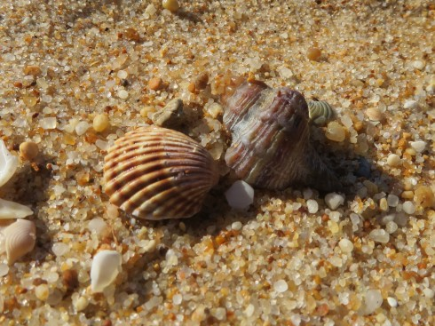 I try not to set up a photo but simply wait till I find shells side by side that have lovely contrast like these two.....and (go to next photo)