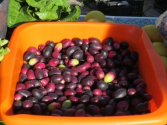This pan of unbrined olives.......the colours are rich and vibrant and of course, the sun shining on them didn't hurt.