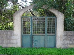 Saw this lovely arched entranceway in the middle of an old fence.
