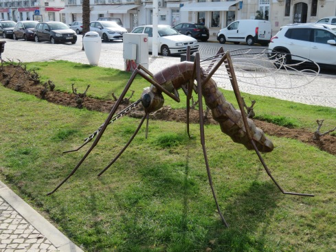 Imagine, mosquitoes in Portugal in January!!!