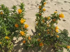 Even the weeds in the sand are beautiful!!