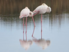 I love that the flamingos sleep while standing