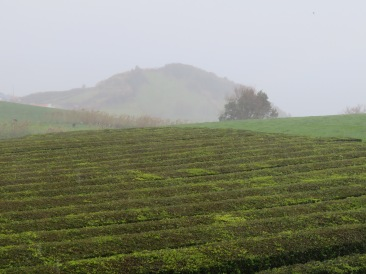 A tea plantation. We had a private tour, enjoyed a hot cup of tea and wandered about.