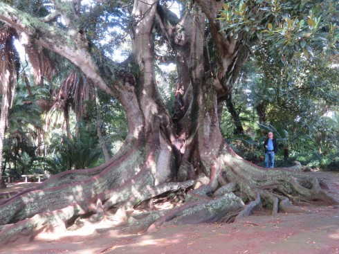 Look at the size of this tree!!!! Gary is dwarfed by the roots.