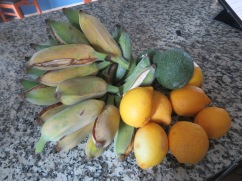 When we arrived home we found that our landlord had picked us a huge clump of bananas......all of this bounty is from our back garden.....avocado, lemons, and bananas. Yummy. Patricia is making us a banana bread.