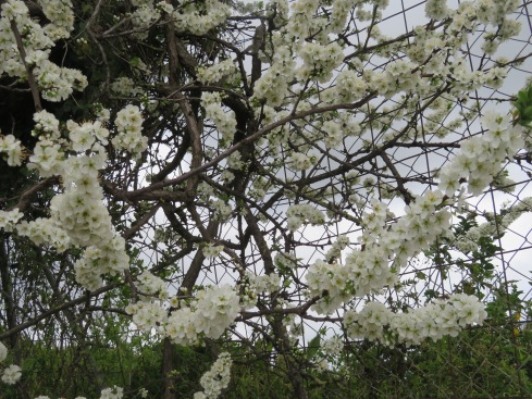A wider look at the unknown blossoms.
