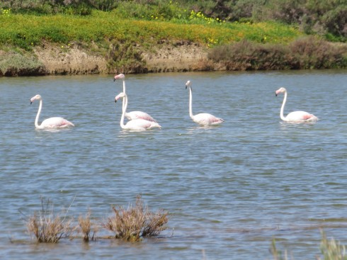 We saw a few different flocks of flamingos enjoying the sunshine.