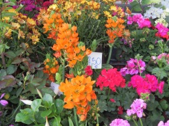 An abundance of colour to greet us just inside the market grounds.