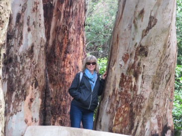 Laurie and the eucalyptus.