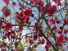 The colour of the blossoms against the sky was quite contrasting and complimentary to my eye.