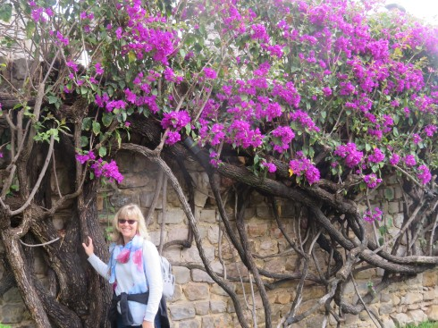 We climbed the walls of the old castle, which are currently alive with the many blooming flowers, including this bougainvillea.