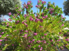 This tree was quite beautiful. A bit lit a weigela but not quite