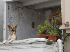 Our neighbour, keeping an eye out for us on our return.
