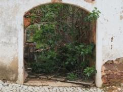 An overgrown garden and an old outdoor arch.