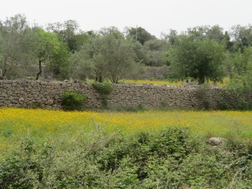 The terraced farm land is beautiful with the stone walls. Again, flowers are everywhere.