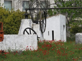 I love the red of the poppies against the white of the old water wheel.