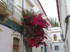 The bougainvillea is starting to come into full flower again. They were in their fullness when we arrived last November.