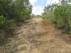 The trail was quite steep and very rocky. The surface of the stones have been rubbed so smooth over the years that it always has an element of slipperiness.