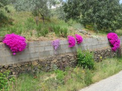 This brilliant splash of colour greeted us as we turned a corner in the winding mountain road.