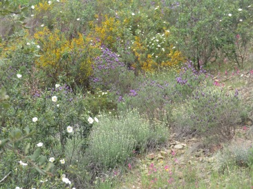 More of the wildflowers.