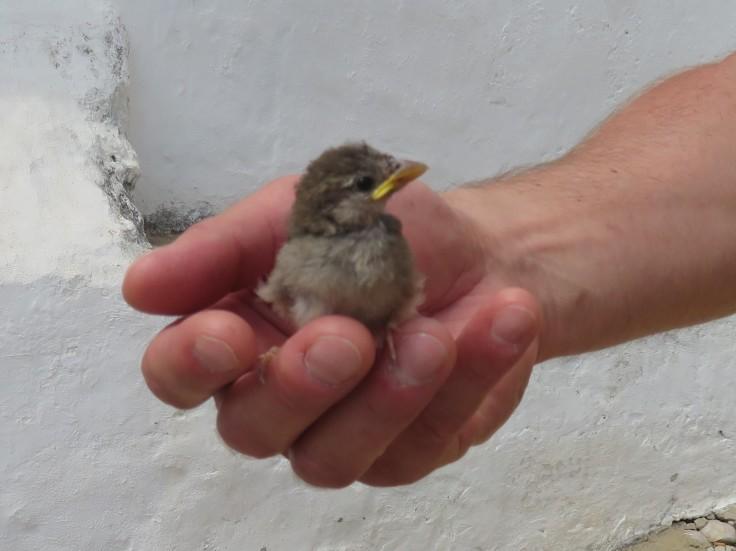 A fellow near the restaurant found a baby bird that had fallen from a nest.