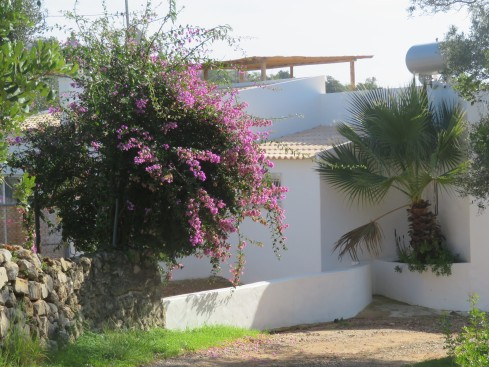 Many of the houses seem to have been recently whitewashed. The contrast with the deep colours of the bougainvillea is stunning.