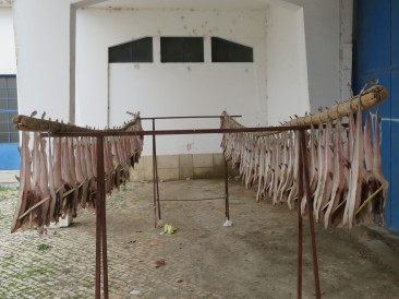 These are a type of fish that are split, a tiny stick is inserted to keep them open then they are hung on poles to dry. When I first started coming here there was a neighbour who dried them each year on the clothesline, right beside the clothes blowing in the wind