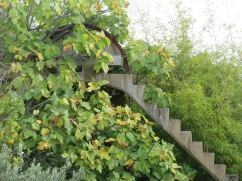 A once functioning water wheel. Tucked tightly in the middle of an abandoned orange orchard.