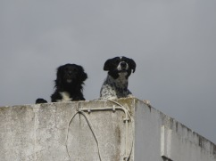 These two rooftop buddies had much to say to us as we walked past.