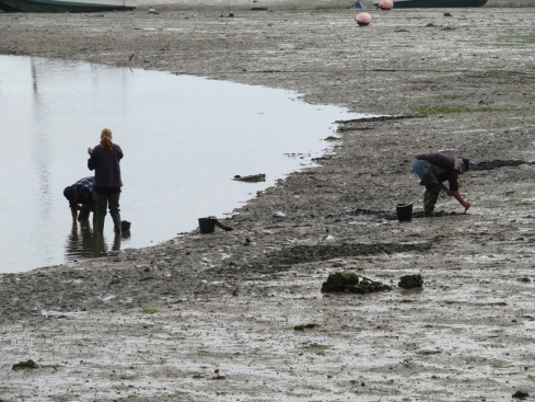 We parked the car and as soon as we got out we noticed these folks digging for clams as the tide was low.