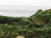 Lovely hues of green.