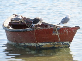The gulls were quite prolific and vocal today.