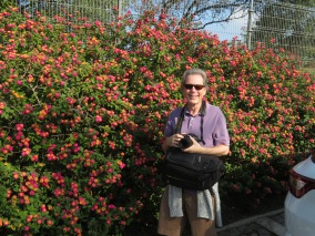 James and the lantana.....doesn't that sound like a great title for a book?
