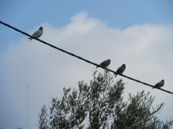 Like a bird, on a wire!!!