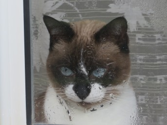 """This cute little face was pressed up against a window. She """"chatted"""" at me for a moment or two!"""