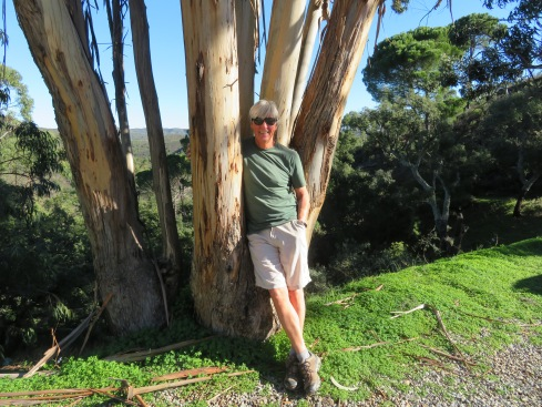 The eucalyptus trees shed their bark because of how quickly they grown, sometimes up to six feet in a season. The scent is heavenly and believe it or not, it cleared my sinuses!!