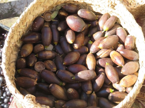 Fresh acorns readily available today. They roast them and make flour from them for baking, or simply eat them.