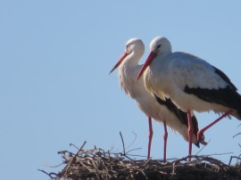 This pair was nesting to the right of our patio table