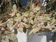 I loved the pinky/beige colour of this succulent.