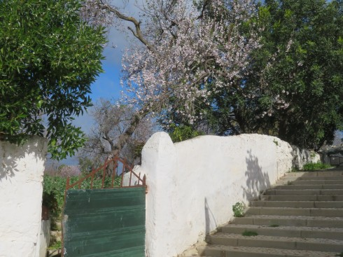 These steps lead up, or down depending on your perspective,from our Quinta parking. The almond tree is almost in full bloom.