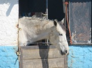 And horse number 2....actually, different door.