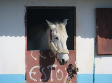 I noticed a few horses occasionally peeping out of this old building.