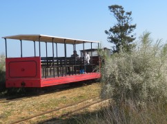 The tiny train that runs the 1.5 kms from the beginning of the island to the beach. We walked it.