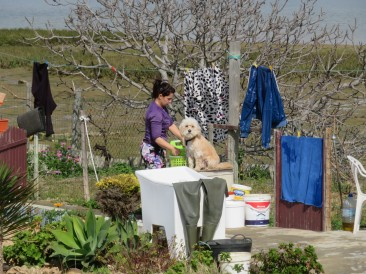 Obviously she is being supervised as she hangs out clothes to dry in the fresh sea wind.