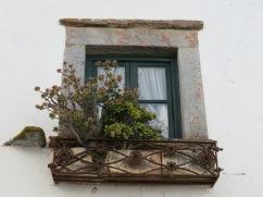 This lovely jade plant decorates the window balcony.
